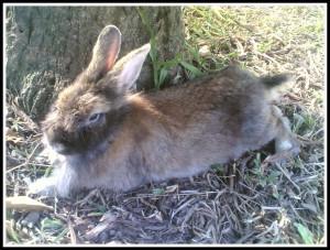 Wasn't he a macho bunny?