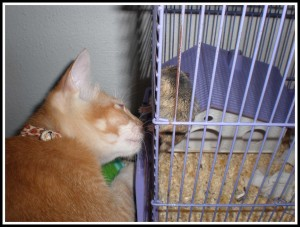 Sniff.. sniff.. Eww! I'm not going to eat this smelly, bitey, furry-ball. I'm trained to eat kibble foods only.