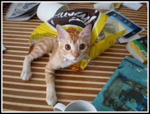 See Mom.. I didn't eat the Twisties. The Twisties eat me!