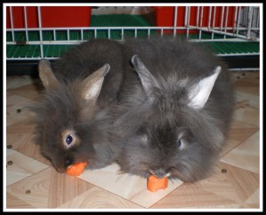 Having their first carrot slice