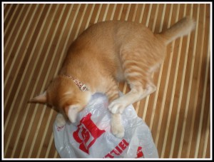 Are u sure u didn't forget to buy the cat-food?! B'coz I can't see any!!