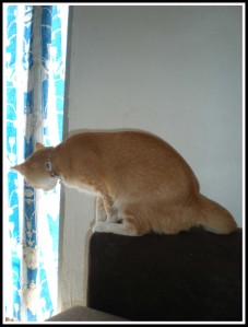 Owh, mom hasn't open the sliding door. I need to check the balcony too. It is in my perimeter!