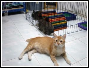The watch-cat