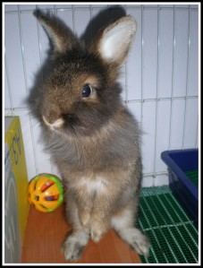 I'm not a periscope. I'm a handsome bunny with beautiful mane. Can u see my mane?