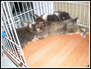 Old photo of them when they were young. Mickybell is hiding herself behind Daddy Dino..