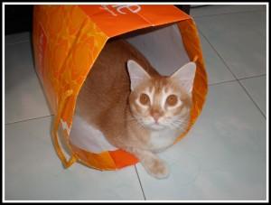 .. the paper bag..