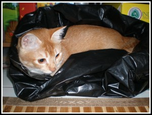 .. and that pathetic garbage plastic bag!