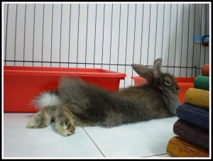 Mocha's with his Sexy-Back Bunny-Q..