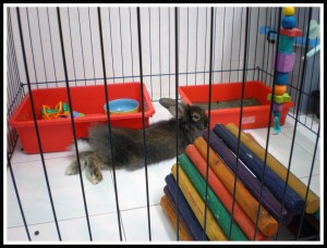 I love my playpen and my toys!