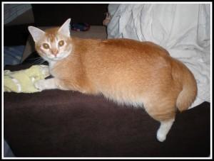 Fat fat kitty Q!
