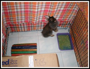 Eh??.. Why Mom suddenly covered my playpen with blankets? Mom said she wants to keep me warm during the post-neuter..  Post neuter? What is that??