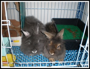 .. Laying together in their cage..