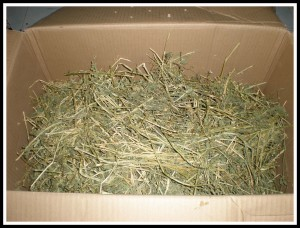 Fresh, green alfalfa! Bunnies will love it!!