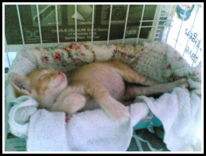 Photo dated 5 Nov 2007 - snuggling in her sleeping box