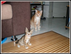Hmmm.. i wonder why the kid stop following me... I think i should have a look..Owh, there she is.. posing for Mom.