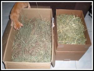 3kg alfalfa and 3 kg timothy hay! Nyom!!