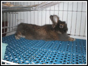 I opened Daddy's door all the night, but he spent all his time inside his cage. Homey bunny, huh?