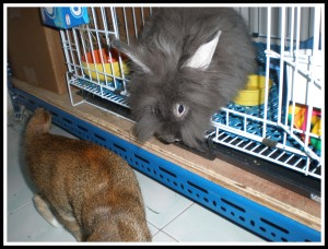 She's asking Memon's help to push the box closer to her cage!