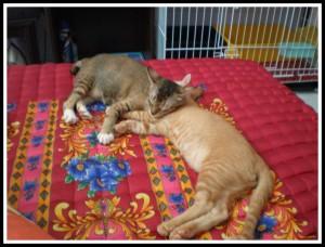 Sleeps in the company of beautiful kitty