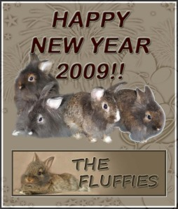 thefluffies-new-year-card-copy