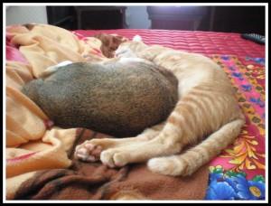 Still snuggling together..