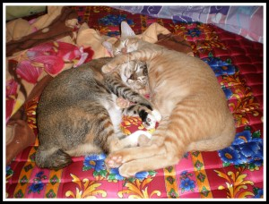 Let's snuggling again... But this time in a better pose! So mom will has something to update in her blog!