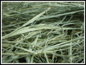 Close up on our Bermuda grass ;)