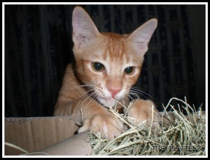 Mom.. Are u sure this is not my catnip?