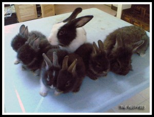 Another bunny-family photo