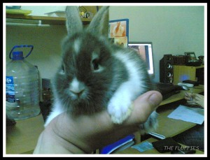 Maxie when he was a few weeks old