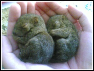 They was sooo cute when they were babies!
