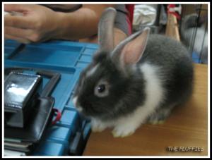 Last but not least, Maxie bunn!