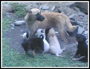 Koko-D's mother and her puppies. I called her Neneng
