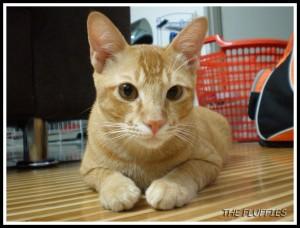 Jebat's the most honest photo : Handsome, handsome and handsome :mrgreen: