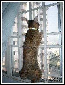 A climber she is. That's why Mom always make sure all windows and doors are sealed.