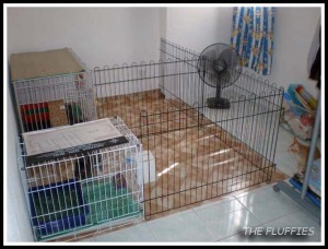Mocha and Mickybell were sharing the same cage and playpen, while Daddy Dino was living next to them. Each cage are attached to an individual playpen