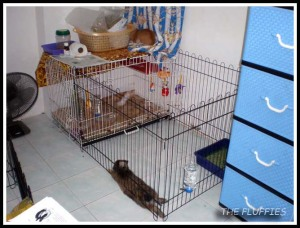 Daddy Dino with his individual cage and playpen