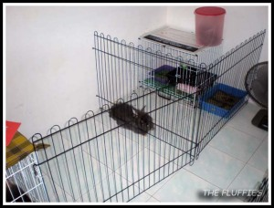 Mocha and Mickybell were being separated, but they still have their individual playpen opposite to Daddy's cage