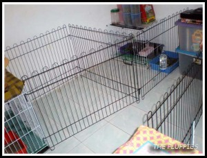 Mocha and Mickybell's cage remain the same