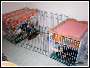 But Daddy has to share his playpen with Dinky. Both of them had to rotate their outing-hours