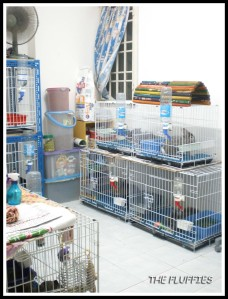 The kits' cages stacked up on each other. The kits love to spray on the wall. Very hard to clean behind the cages