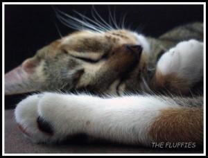 Sleepies Memon
