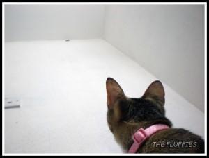 Hey cockroach, come down here! I'll show u who's incharge!!
