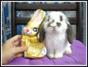 Bunny choc is as yummy as Shiro's choc ears!