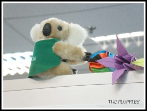 I put the koala at the glass partition of my workstation in the office
