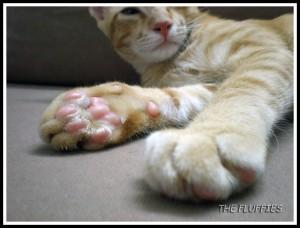Jebat's smelly stinky paws