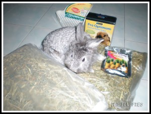 Achilles is the inspector-bunny of the day :mrgreen: