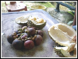 We went to a durian orchard in Relau, Penang Island last weekend. Thinking about go again this weekend :mrgreen: