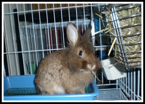 Here it is! I'm munching on my hay. Nice pose? Now bring me my treats!!!