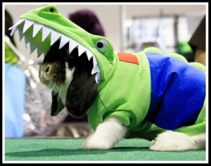 Another photo of Lulu in crocodile costume (his mom stole this costume from one of the participants just for photography session before the competition!) :mrgreen: Lulu looks cute!